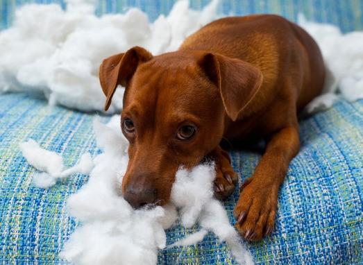 Haftpflicht Haustiere
